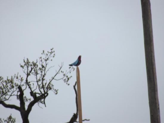 oiseau des jeunes 2012